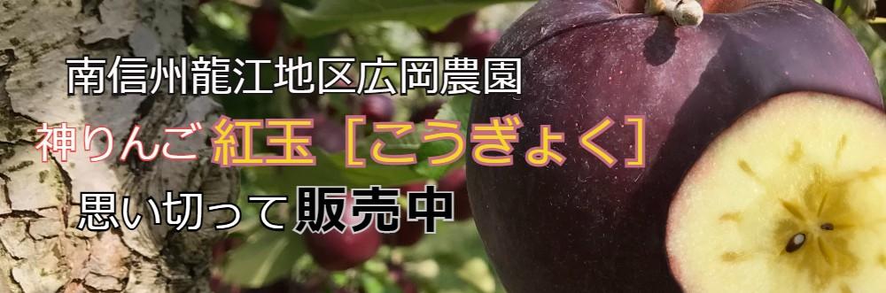 信州紅玉りんご、蜜入りりんご、絶品りんご、豊かな酸味と甘み、広岡農園神りんご